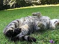 máme na zahradě kočky, tak pejsky prosím tentokrát neberte s sebou, děkujeme - chata k pronájmu Skalice