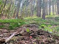 Les vedle chaty. - Horní Bečva