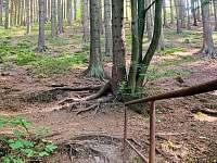 Náš mostek do krásného lesa. - Horní Bečva