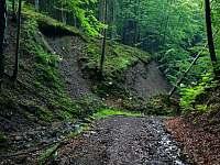Okolní příroda - pronájem chaty Návsí
