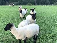 naše ovečky - chalupa k pronajmutí Valašská Bystřice