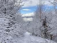 Les u chalupy v zimě - Hrádek
