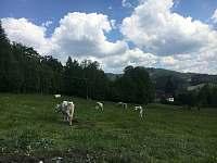 Pastva - pronájem chalupy Prostřední Bečva