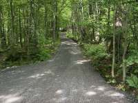 Les s potůčkem vedle chalupy - Guty