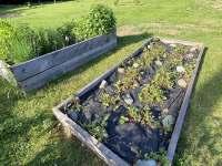 Plody zahrady, které můžete volně mlsat - pronájem chalupy Guty