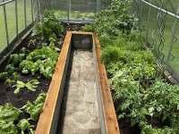 Plody zahrady, které můžete volně mlsat - Guty