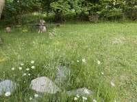 Zahrada nad chalupou - venkovní ohniště - Guty