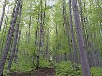 místní les - Řeka u Smilovic