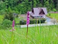 Pohled na chatu v létě
