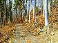 příjezd k chatě - březen - Bystřice nad Olší