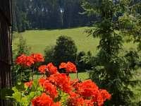 výhled z chalupy-les,louky - ubytování Velké Karlovice