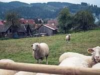 pohlad okolní pastviny - apartmán k pronajmutí Nový Hrozenkov
