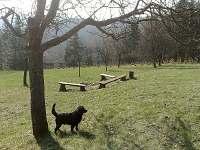 Ohniště v sadu 100 m od chalupy a pes Džon