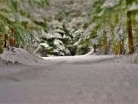 Beskydy - ideální místo pro běžky, lyže a procházky