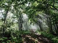 Nádherné bukové lesy v okolí Rožnova