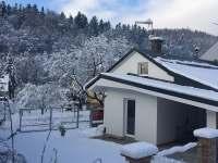 Okolní les v zimě