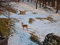 Lesní zvěř - Bystřice