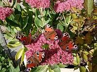 motýlci-Ostravice, 1.10.2021 - chalupa k pronájmu