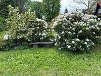 Zahrada - chata k pronajmutí Ostravice