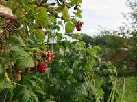 Možnost ovocných plodů přímo ze zahrady - chalupa k pronájmu Horní Bečva