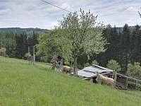 Valašská Senice - chalupa k pronájmu - 22