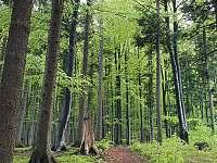 Les nad chatou - Řeka