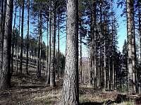 Procházka lesem na Ropičku - Řeka