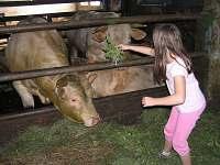Možnost prohlídky malé farmy