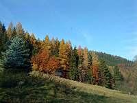 příroda na podzim - pronájem chalupy Rajnochovice