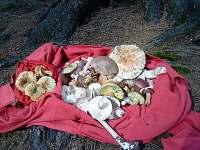 Ráj pro houbaře - chalupa ubytování Rajnochovice