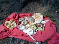 Ráj pro houbaře