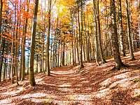 v okolí lesní cesta