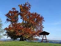 Tip na výlet: památný strom Žídkův buk (Lužná) -