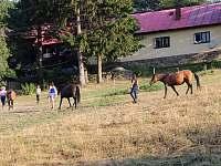 Grunt Vráblenka - koně pod Gruntem - Lužná u Vsetína