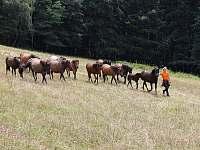 Grunt Vráblenka - koně pod Gruntem - chata k pronájmu Lužná u Vsetína