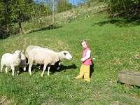 Krmení oveček - Huslenky