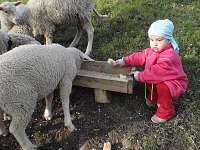Krmení oveček - pronájem chalupy Huslenky