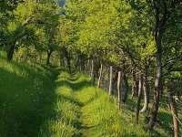 cesta k lesu - chata k pronajmutí Huslenky