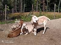 Horečky ranč - Tichá