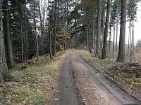 Příjezd po lesní cestě