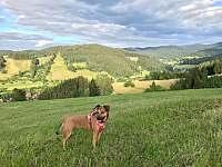 Procházka s pejskem na kopcích nad chalupou - pronájem Nový Hrozenkov