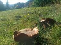 Rostly i na pozemku chalupy - Dolní Lomná