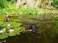 Psi se u nás mají jako v ráji - chalupa ubytování Heřmanov - Fojtovice