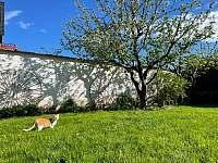 malá zahrada ve dvoře - chalupa k pronájmu Keblice
