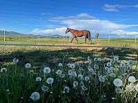 výběh pro koně - pronájem chalupy Keblice