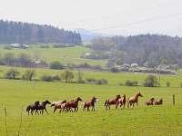 NORD RANČ - nekonečný prostor ranče :-)