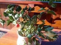 Chalupa k pronájmu - chalupa k pronájmu - 6 Krásná Lípa - Zahrady