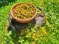 Chalupa k pronájmu - chalupa ubytování Krásná Lípa - Zahrady - 5