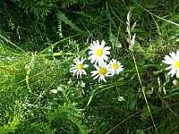 Chalupa k pronájmu - chalupa k pronajmutí - 4 Krásná Lípa - Zahrady