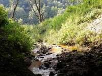 Vřesoviště a borůvčí - Hřensko